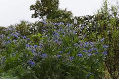 _DSC2034 (Osamu1965) Tags: flower japan zeiss garden spring sony contax jp   okayama     a7m2  carlzeissvariosonnart2870mmf3545mm