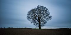 just a tree, a lonely tree (Florian Grundstein) Tags: und wars langzeitbelichtung arschkalt