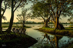 Nature is home (Daran Kandasamy) Tags: travel trees lake reflection green nature water sunrise canon landscape countryside asia paradise outdoor lka wanderlust adventure explore swamp srilanka wilderness discover habarana canon7d