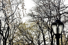 Central Park (Victor Muruet) Tags: victormuruetphotography fotografíavíctormuruet nuevayork newyork lagranmanzana thebigapple victormuruetvíctormuruetmuruetnewyorknew yorknuevayorknuave yorkgranmanzanabig applebigapplegran manzanacityciudad