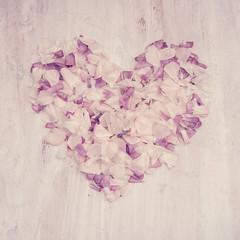 ranunculus petal heart (photoart33) Tags: stilllife white flower love square petals purple heart ranunculus ranunculusheart