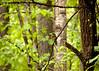 Resident Bluebird (2) (tommaync) Tags: blue trees usa brown white bird nature animal nc nikon wildlife beak northcarolina april bluebird pittsboro chathamcounty 2016 d40