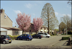 Minolta XD-7 - DM Paradies 200 Testfilm (06) (Hans Kerensky) Tags: test slr 120 film 35mm lens japanese md minolta scanner neighborhood 200 target 12 dm xd7 45mm paradies rokkor plustek opticfilm 2650ppi
