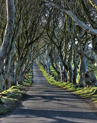 dark hedges (seanfderry-studenna) Tags: road county ireland sunset irish mist plant tree nature forest sunrise dark landscape alley outdoor branches tourist northern beech hedges antrim armoy