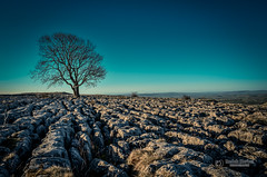 The lone tree (tbnate) Tags: sky tree nature sunrise landscape outside nikon outdoor yorkshire northyorkshire yorkshiredales thedales d5100 nikond5100 tbnate
