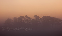 Sunrise Saltmills (Ken Meegan) Tags: trees ireland sunrise cowexford saltmills 2792015 sunrisesaltmills