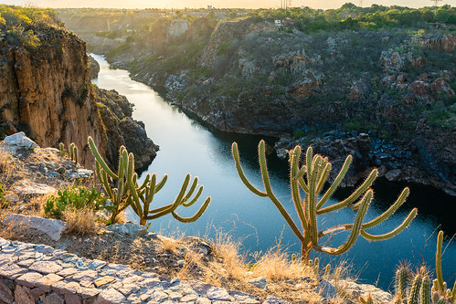 Cactus at the edge of a cliff.