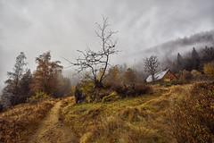 Weg am Kleinen Arbersee (mfugo1) Tags: see nationalpark nebel bergsee morgenstimmung mittelgebirge nebelstimmung