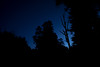 Tree Silhouettes DSC05416-1 (jasonclarkphotography) Tags: newzealand christchurch sony tasman nex nelsonlakesnationalpark canterburynz lakerotoroa nex5 jasonclarkphotography