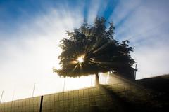 Nebelgrenze Rti b. Riggisberg (Bugtris) Tags: tree fog nebel zaun landschaft sonne baum rti 2470f4l 5dmkiii