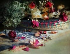 home alone (Ani Carrington) Tags: red roses love romance romantic stillife textured whiteredwhitered