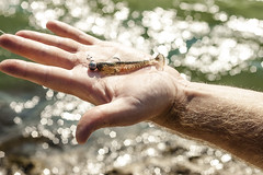 Fishing at Sava River 3 (Denis Indir) Tags: fish canon river 50mm fishing outdoor fisher 18 500d t1i