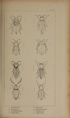 n186_w1150 (BioDivLibrary) Tags: greatbritain insect bugs beetles arthropoda californiaacademyofsciences coleoptera taxonomy:order=coleoptera colorourcollections bhl:page=39306982 dc:identifier=httpbiodiversitylibraryorgpage39306982 bhlarthropod