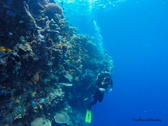 Into the Blue, Bunaken