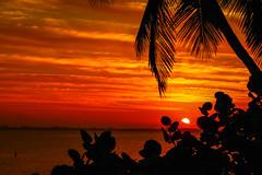 Hutchinson Island Sunrise #3 (tclaud2002) Tags: park morning sky usa sun tree nature weather sunrise outside outdoors dawn florida lagoon palm palmtree tropical indianriver seagrapes jensenbeach indianriverlagoon hutchinsonisland indianriversidepark