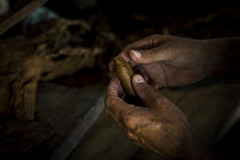 _62A0892 (gaujourfrancoise) Tags: cuba carribean tabac cigars tobacco cigares carabes tobaccoleaves feuillesdetabac gaujour