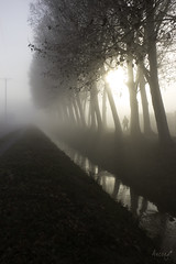 5/52 La banqueta del canal (ancoay) Tags: tree fog sunrise canal arboles alba amanecer arbres niebla boira urgell canon600d ancoay