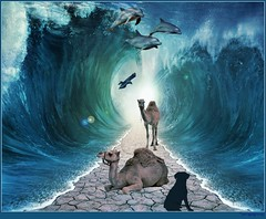 Waiting for Moses (PaulO Classic. ) Tags: ocean voyage travel sea abstract beach water swim death escape crash dolphin walk destruction pass surreal wave crack tsunami part moses camel land png picmonkey