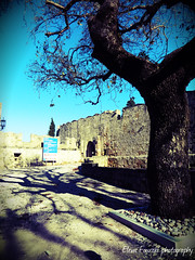 castle of knights , Rhodes (braziliana13) Tags: shadow tree castle place outdoor greece knights historical rodos rhodes greekisland   greekhistory castleofknights