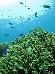 IMG_2539.jpg (d3_plus) Tags: sea sky fish beach coral japan canon scenery diving snorkeling  shizuoka    apnea izu     skindiving minamiizu    g10    hirizo  canonpowershotg10   nakagi  beachhirizo misakafishingport