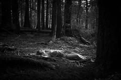 _MG_2442.jpg (Nicolette Ivy) Tags: blackandwhite fashion fairytale woods fashionphotography fairy pacificnorthwest aliceinwonderland blackandwhitephotography woodnymph storyphotography outdoorphotography outdoorfashion fairytalephotography fairyfashion