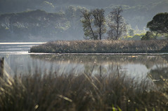Morning Mist - Eden (kelly.hildreth75) Tags: mist reflection dawn sony australia nsw newsouthwales inlet eden alpha slt amount a57 55200mm apsc sonyalpha sal55200 dt55200 dt55200mm sal552002 sonyafdt55200mmf456sam sonya57 sonyslta57