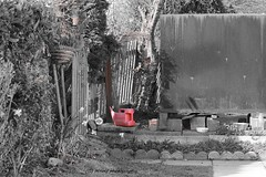 In John's back garden. (MAMF photography.) Tags: uk greatbritain england blackandwhite bw monochrome garden photo blackwhite google nikon flickr noir arty noiretblanc zwartwit unitedkingdom britain yorkshire negro gb zwart pretoebranco schwarz biancoenero selectivecolour greatphoto googleimages enblancoynegro zwartenwit greatphotographers mamf inbiancoenero schwarzundweis nikond7100 mamfphotography