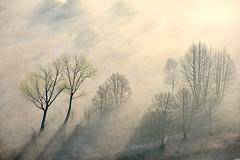 Airuno_4 (Riboli Alessandro) Tags: light rio fog alberi landscape nikon alba fiume natura nikkor sole nebbia atmosfera luce ai paesaggio lecco magia 80200 mattino foschia d700 airuno