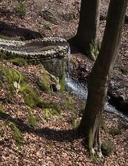 beekhuizen (Harm Roelofzen) Tags: forest woods stream beek arnhem bach d750 bos wald veluwezoom natuurmonumenten beekhuizen velp rozendaal beekhuizerbeek beekhuizerbos