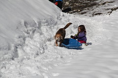 Lucy walking around the kids (Aggiewelshes) Tags: winter dog snow dogs lucy sledding snowshoeing february olsen jovie 2016 greencanyon