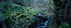 Stream Running into North Esk River (Alan Whyte) Tags: pct lothians riveresk alanwhyte whytelightphotography