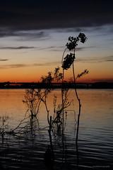zalazak1-15.04 (vozNS) Tags: sunset river outdoor serbia danube srbija zemun dunav reka zalazak