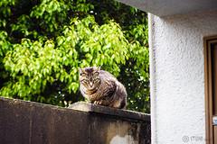 Today's Cat@2016-04-17 (masatsu) Tags: cat pentax cc100 catspotting mx1 thebiggestgroupwithonlycats