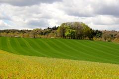 Berg en Dal (Gelderland) NL (ToJoLa) Tags: sky green clouds canon landscape spring explore lucht lente bergendal landschap gelderland voorjaar 2016 grasland canoneos60d
