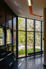 _KLE7688 (hermelin52) Tags: deutschland essen gemany ude frhling kirschblte stadtessen universittduisburgessen campusessen