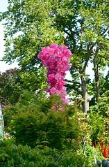 DSC_1723 (erica.hendershot) Tags: seattle chihuly tourism glass skyline garden washington place market pike pikeplace vibrantcolors seattlewashington glassexhibit chihulygardenandglass chihulygarden