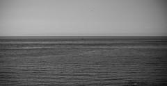 Swansea Bay (swanseajack2013) Tags: uk sea abstract swansea wales port bay boat sailing wind gulls hering talbot
