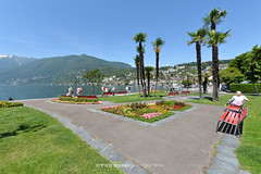#006 Ascona - Lungolago (Enrico Boggia | Photography) Tags: ascona estate fiori giugno palme lagomaggiore lungolago verbano 2014 sopraceneri enricoboggia