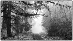 The Way . (:: Blende 22 ::) Tags: old trees winter blackandwhite white mist snow storm black monochrome clouds last germany deutschland thringen blackwhite nebel wind cloudy thuringia sw wintertime schwarz act eic klippen weis eichsfeld einfarbig schwarzweis canoneos5dmarkii dieterderklippen dieterode ef2470f28liiusm