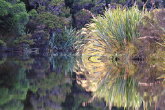 okarito reflection (rina sjardin-thompson photography) Tags: light newzealand reflection nature water weather rural river landscape symmetry nz southisland wilderness westcoast westland okarito waterscape okaritolagoon southwestland rinasjardinthompson