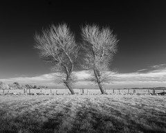 Company (jellyfire) Tags: trees blackandwhite monochrome zeiss canon landscape ir mono suffolk infrared aldeburgh ze landscapephotography canon5dmkii distagont3518 zeissdistagont18mmf35ze