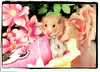 """Bye bye, Sister"" ~ Tofi (pyza*) Tags: pet animal rodent critter pip hamster fifi syrian hammie chomik filifionka playinpeace"