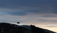 Leaden (jackierobinsonphotography.com) Tags: mountain tree silhouette clouds landscape ominous hill overcast brooding