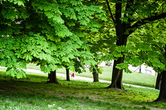 False Spring Park. Paris, Buttes Chaumont, April 2016 (Lepidoptorologic beauty*) Tags: park paris green 50mm pentax 50mm14 fullframe smc parc butteschaumont lightroom k1 buttes lr6 kmount pentaxk smcpentaxfa50mm14 pentaxk1 intothepark lightroom6 pentaxfullframe