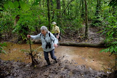 LC Bill0 tramoing through mud at Tambopata Research Station in Peru-02 5-31-15 (lamsongf) Tags: travel peru southamerica tambopata amazonbasin