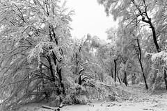 april - the new december ? (MR@tter) Tags: schnee bw snow forest de geotagged deutschland natur nrw sw wald nordrheinwestfalen sauerland herscheid nordhelle mrkischerkreis sonydscrx100
