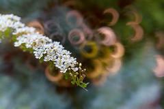 (kinga.lubawa) Tags: flowers flower colors canon spring sensual kwiaty kwiat kolory kolorowe sonecznie canon6d