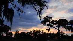Sunset April 25th. 2016 (Jim Mullhaupt) Tags: pictures camera pink blue sunset red wallpaper sky orange sun color tree weather silhouette yellow clouds landscape photography gold evening photo nikon sundown florida dusk snapshot picture palm exotic p900 tropical coolpix bradenton endofday cloudsstormssunsetssunrises nikoncoolpixp900 coolpixp900 nikonp900 jimmullhaupt
