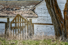 """""""Still 'round the corner there may wait, (garshna) Tags: old tree abandoned fence outdoors ruins gate quiet decay farm neglected forgotten weathered grasses homestead derelict destroyed deserted decayed decaying abandonement urbex easternwashington"""