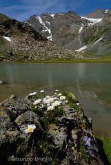 Pian Borgnoz 05 (maurizio.broglio) Tags: parco gran paradiso nazionale pian valsavarenche borgnoz